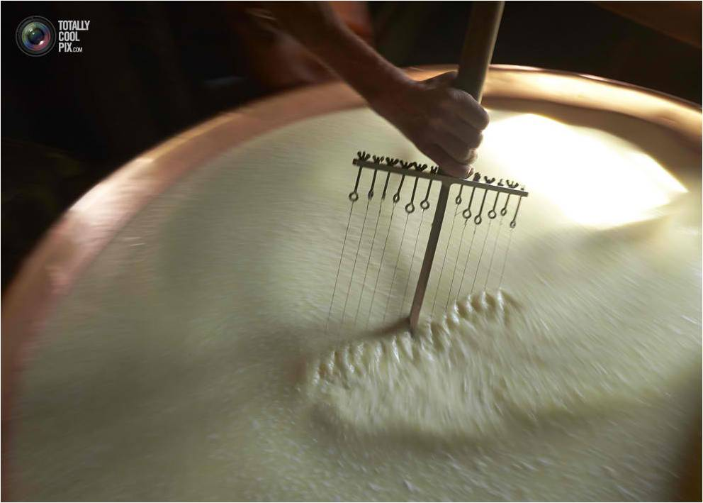 Cutting of the curds