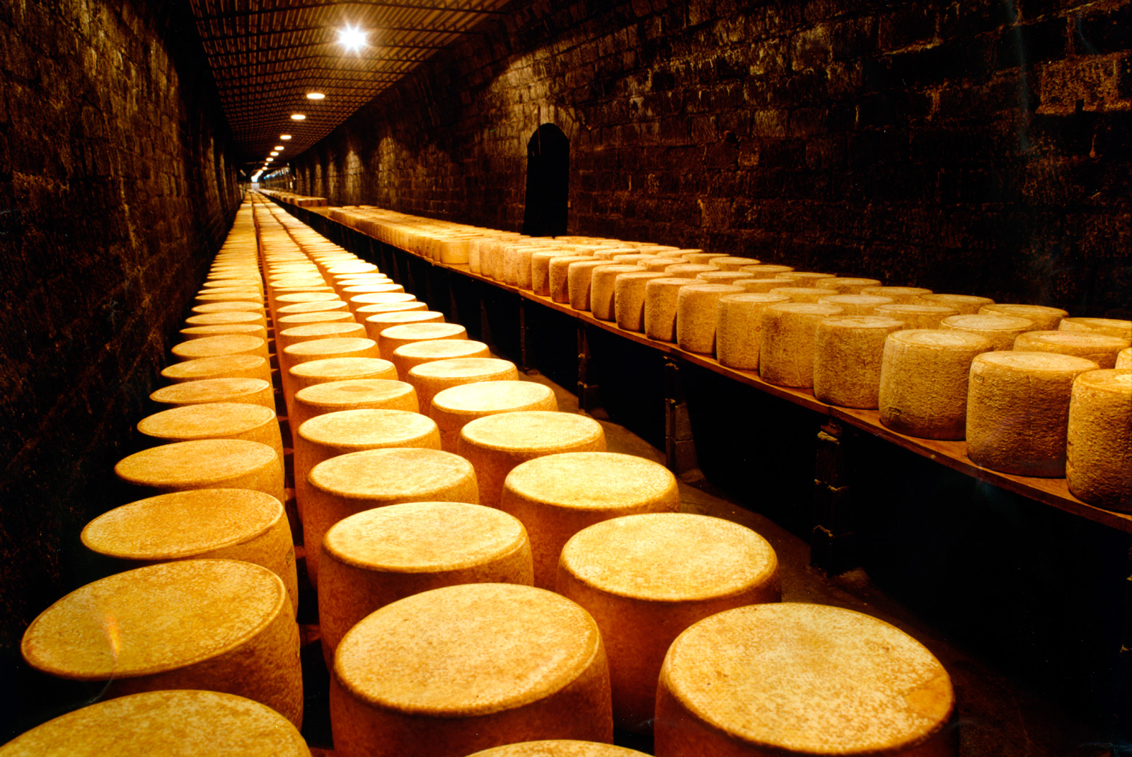 Ripening cellars with wheel of cheese rows.