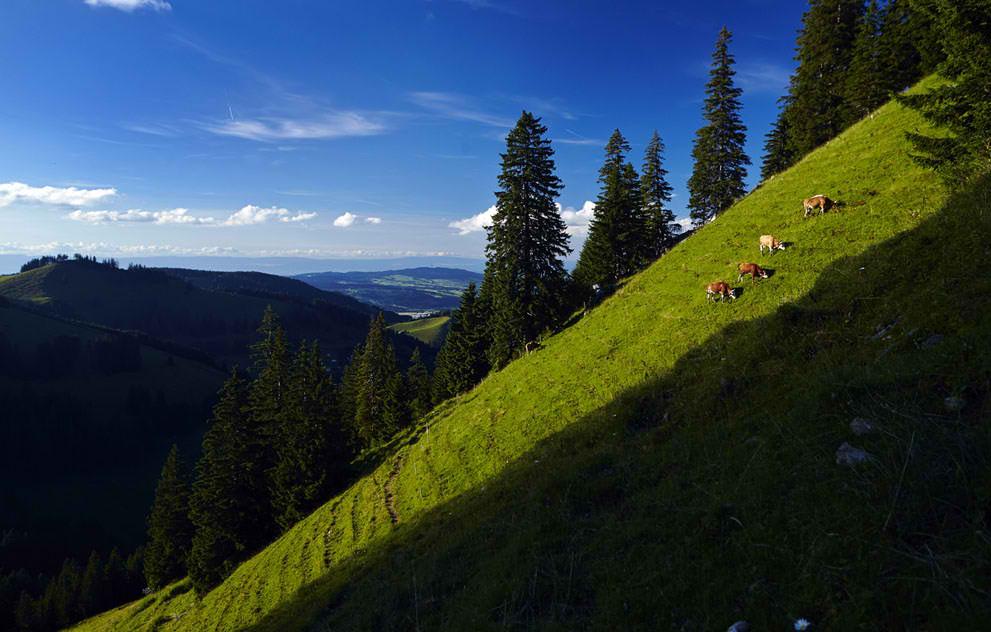 Les pâturages d'altitude, ou alpages, ici sur les pentes de Tsermon offrent une richesse naturelle exceptionnelle qui confèrent aux fromages de montagne leur spécificité.